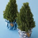 rosemary tree martha stewart